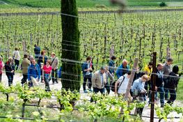 Vino in Festa: Wine Excursion Day